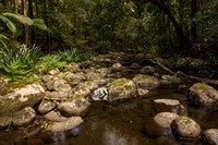 Border Ranges forest stream