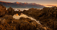 Kaikoura rock pool with Neptune's necklace